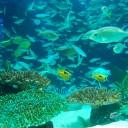 水族館 フリー素材ドットコム Part 4