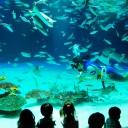 水族館 フリー素材ドットコム Part 3
