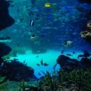 水族館 フリー素材ドットコム Part 2