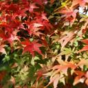 秋景色 紅葉 もみじ 01 フリー素材ドットコム