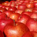 リンゴ フリー素材ドットコム