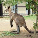 動物園 フリー素材ドットコム Part 6