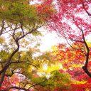 秋 フリー素材ドットコム