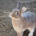 ウサギ フリー素材ドットコム